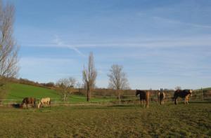 Bonne année 2012 ! dans 4a-Hiver 2012 pr%C3%A9-aux-5-chevaux-300x197